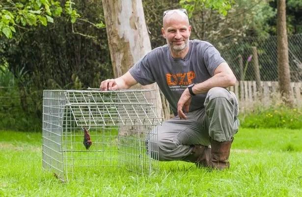Le propriétaire du zoo Dartmoor, Benjamin Mee, avec le piège inoffensif appaté avecau veau qui a repris le lynx Flaviu après trois semaines de fuite