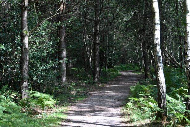 Once predominantly an ancient oak forest,. Alice Holt In Farnham Is An Incredible Forest With Superb Family And Dog Friendly Walks Surrey Live