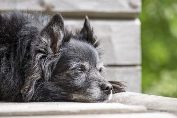 A dog's age depends on breed, size and genetics
