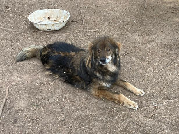 Peter is described as a 'friendly, happy boy' (Photo: Dogs4Rescue)