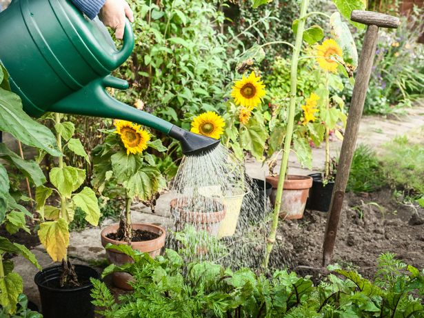 Homebase Watering Can