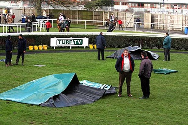 Two horses electrocuted in horror accident at Newbury ...