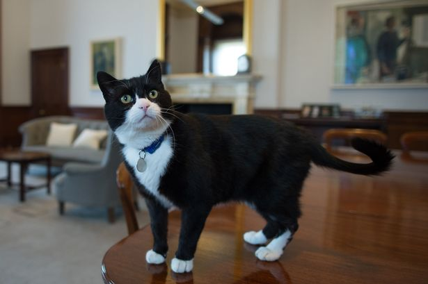 Downing Streets Larry the cat has competition as