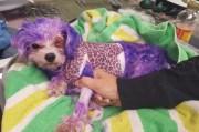 dog dies owner