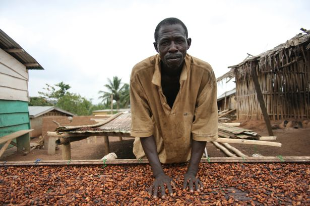 A man can be seen working on a cocoa farm in Ivory Coast