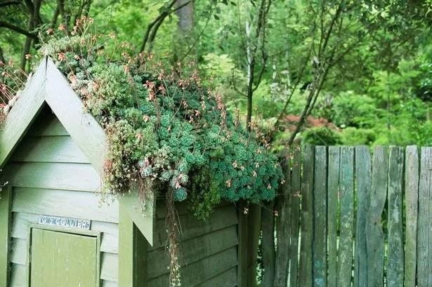 Diarmuid Gavin Grow yourself a roof garden  Diarmuid