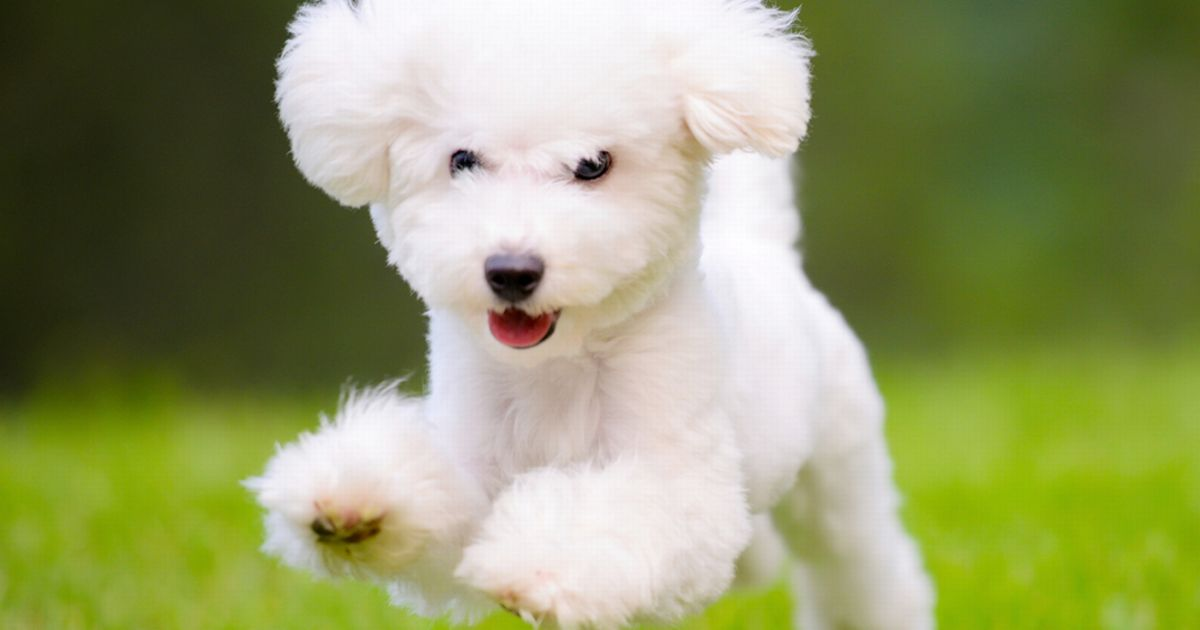 Cute Puppy Images Wallpaper Fluffy Paralyzed Man Wakes Up To Find Dog Eating One Of His