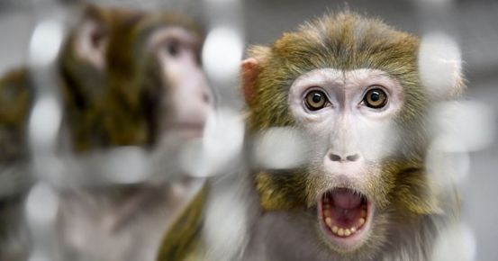 All 27 monkeys kept at NASA's research center were killed in one day in 2019, the report claims – World News
