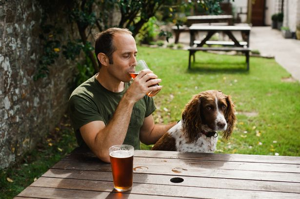 Man sitting in pub garden with Spaniel dog drinking pint of beer