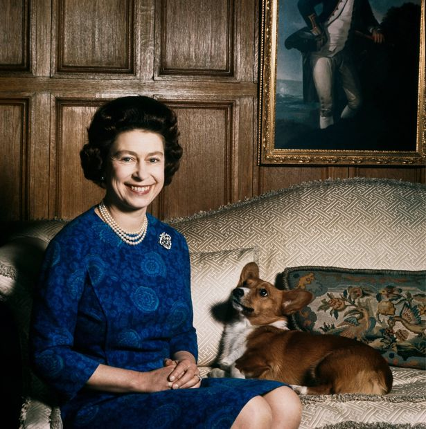 The Queen reportedly did not plan on getting any new dogs