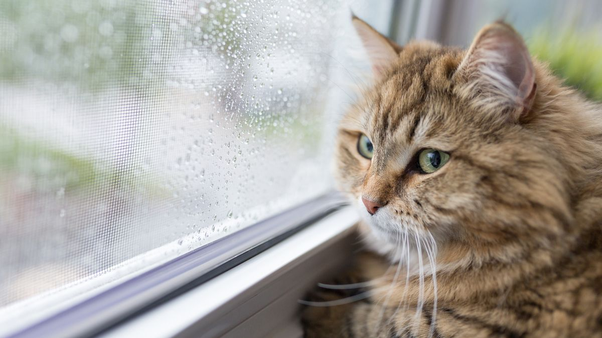 Should pet cats be banned from going out to protect wildlife?