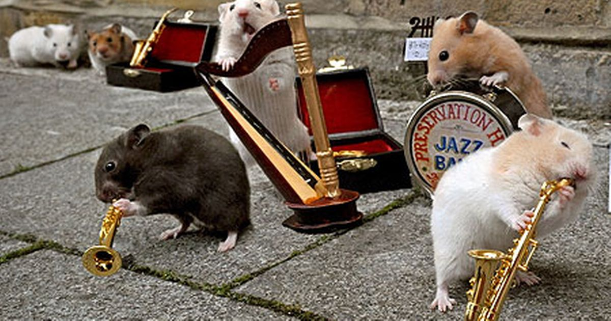 Amazing Pictures Of Hamsters Playing Tiny Jazz Instruments