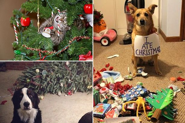 Pets Who Ruined Christmas Meet Cats And Dogs Who