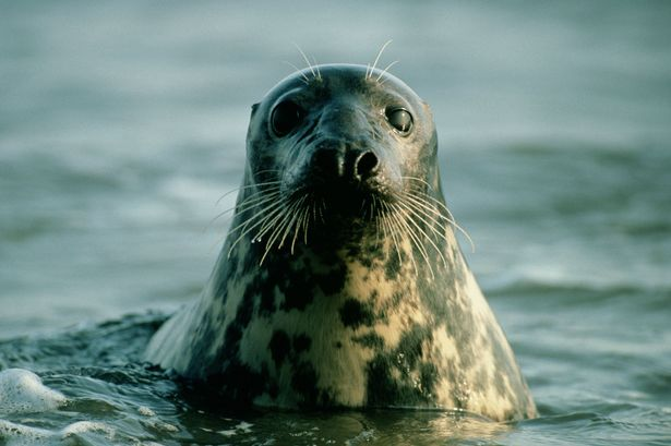 seals are being shot