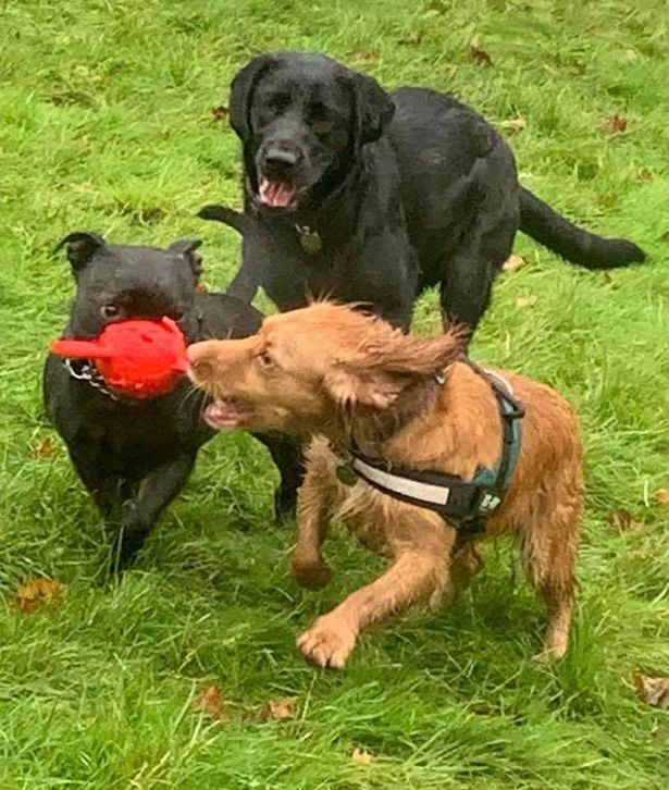Dogs enjoying themselves at Paws and Play