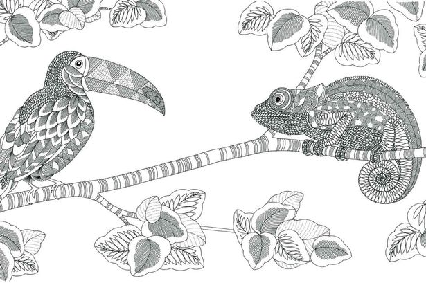 Artist from Tenby behind Animal Kingdom colouring book