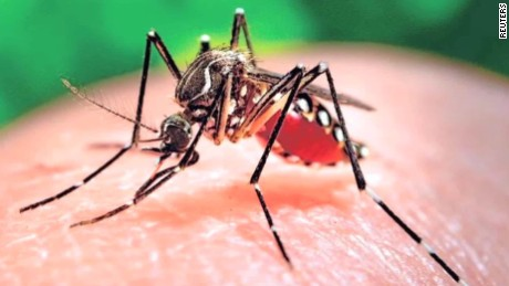 Image result for zika