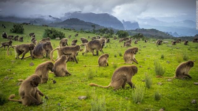 نتيجة بحث الصور عن Ethiopia