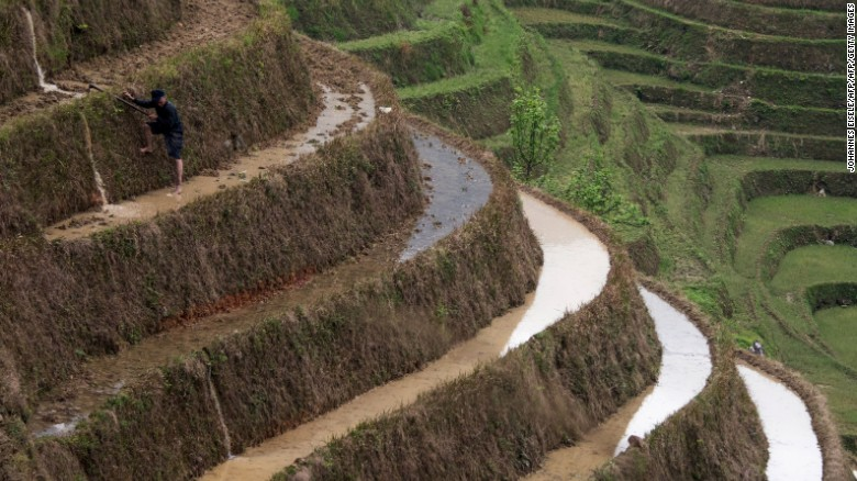 This photo taken on April 11, 2016 shows a farmer climbing down terraced rice fields near the village of Tiantou in Longsheng county, in southern China's Guangxi.