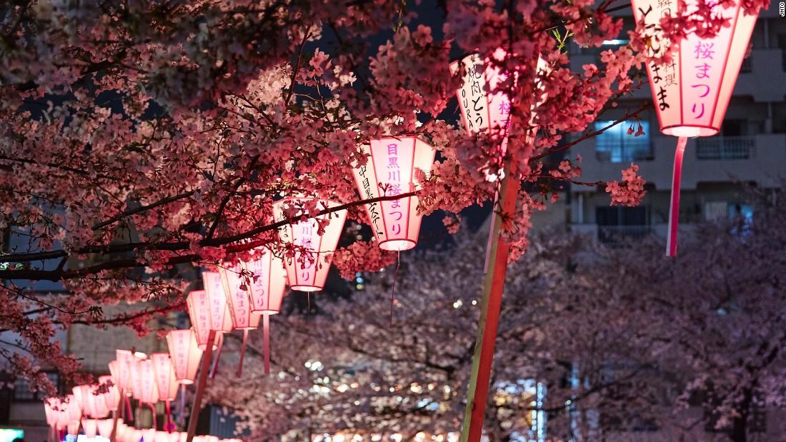 Live Wallpaper Money Falling A Guide To Japan S Cherry Blossom Season Cnn Com