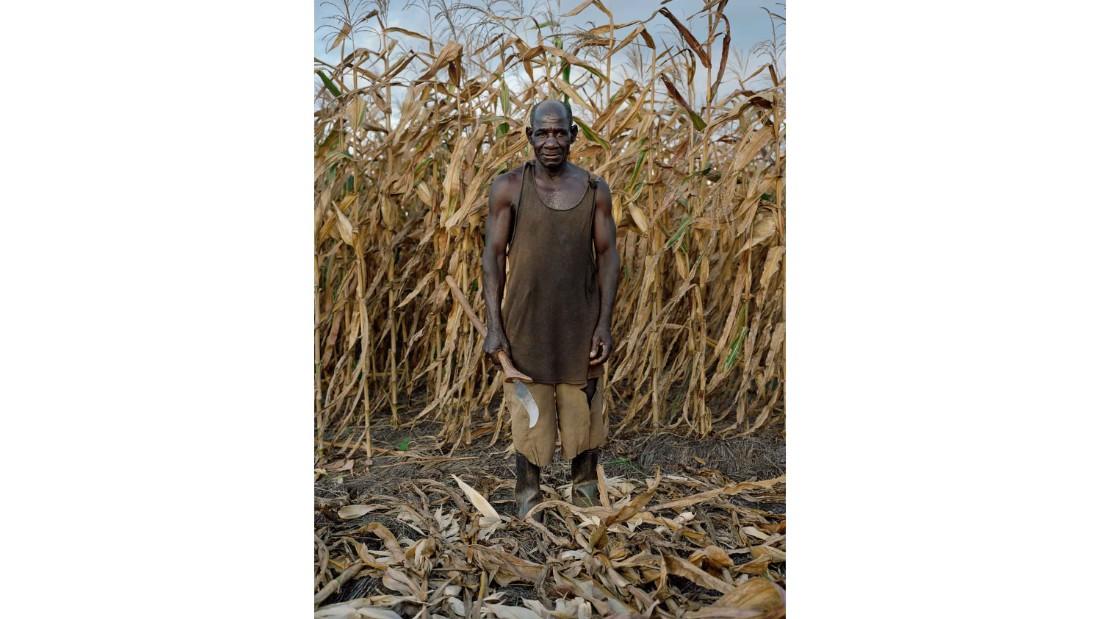 David Matandala, 75, harvesting Maize in Mlonda Village, Malawi