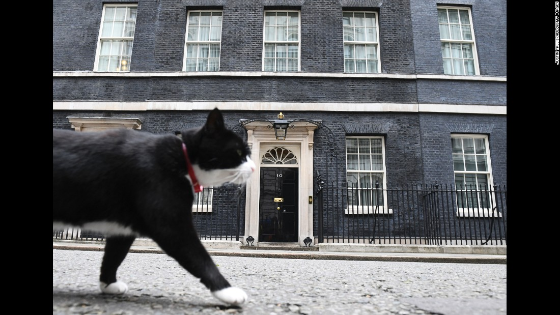 Palmerston, a cat who lives at the Foreign and Commonwealth Office in London, walks past 10 Downing Street on Friday, June 9.