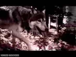 New McCain ad paints Democrats as a wolfpack hunting Palin.
