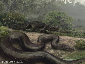 An artist's impression of what Titanoboa cerrejonensis would have looked like.