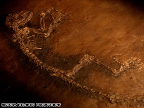 The fossil is believed to be an ancestor of monkeys, primates and humans.