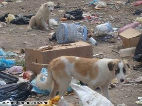 Stray dogs roam a Baghdad neighborhood in November 2008, when the culling program began.
