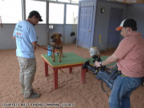 Former grand champion fighter Lucas has found a new life at Best Friends Animal Sanctuary.