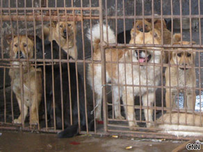 Ban cat and dog meat?