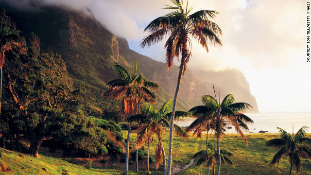 Lord Howe Island has some of the most beautiful palm trees.