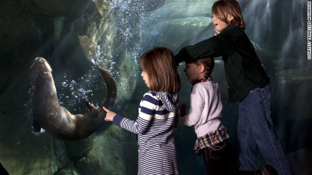Family travel is far from perfect, so embrace that imperfection with a 'wabi sabi' trip. Make it easier on yourself and go regional. In the Southeast, Chattanooga, Tennessee, and Huntsville, Alabama, are packed with activities for kids. The Tennesse Aquarium is a popular attraction in Chattanooga.