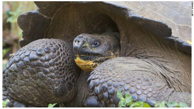 """Zoológico brinda """"terapia"""" de pareja a tortugas en crisis sentimental"""