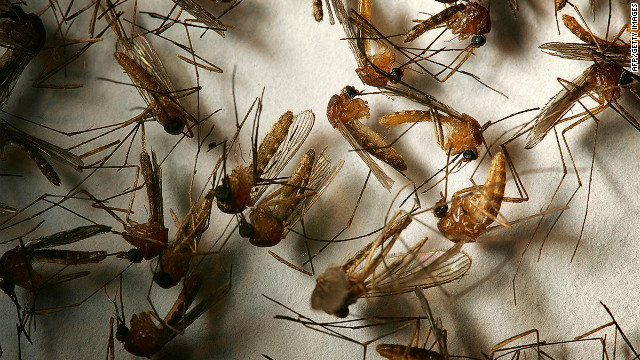 Most mosquitoes don't carry West Nile virus, and you may not get sick even with a bite from a West Nile mosquito, experts say.