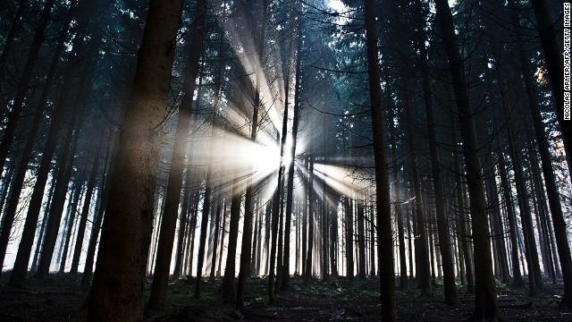 121128121258-forest-germany-sunlight-horizontal-gallery.jpg