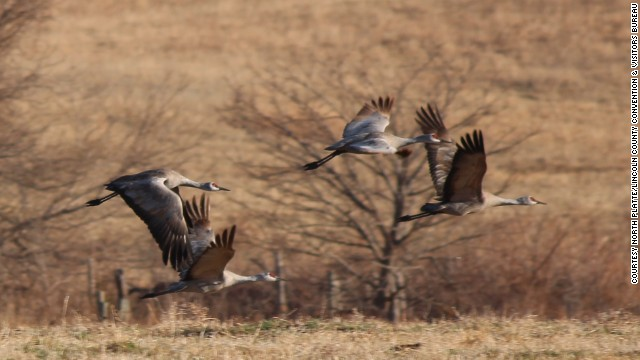 Head to Kearney, Nebraska, to see the great Sandhill Crane migration. About 500,000 of these spectacular birds make a spring pit stop here before heading north.