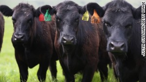 Research shows that conventional methods of raising beef are environmentally harmful.
