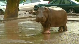 Fierce flooding leave zoo animals stranded in Tbilisi