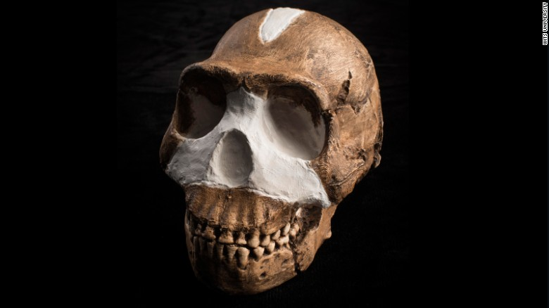 """Overall, Homo naledi looks like one of the most primitive members of our genus, but it also has some surprisingly human-like features, enough to warrant placing it in the genus Homo,"" said John Hawks of the University of Wisconsin-Madison."