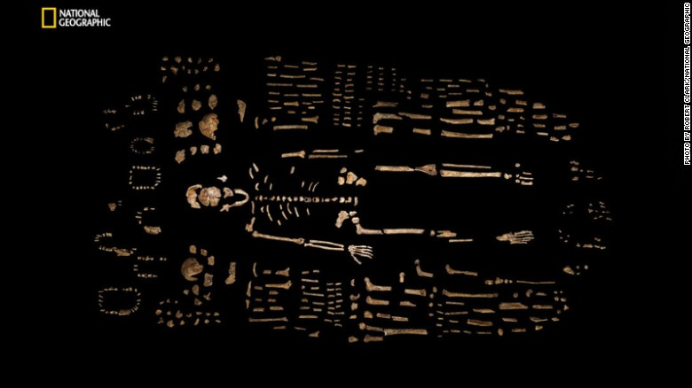 A composite skeleton of Homo naledi is surrounded by some of the hundreds of other fossil elements recovered from the Dinaledi Chamber of the cave.