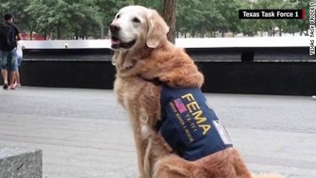 Bretagne, 9/11, 9/11 dogs