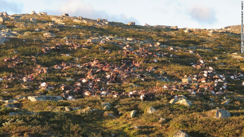 The Norwegian park is home to Europe's largest herds of wild reindeer.