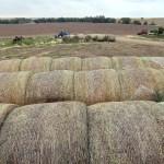 Farming A Multi Million Dollar Business