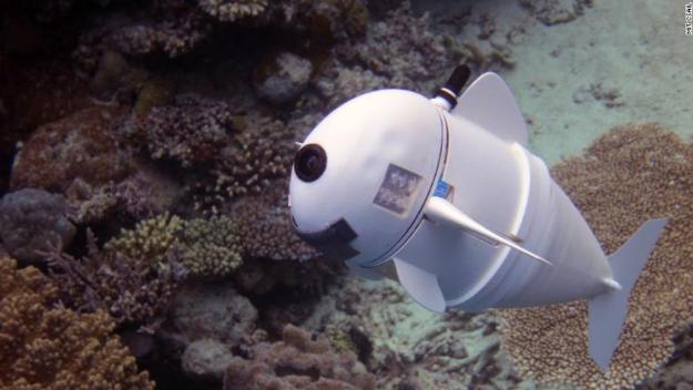 SoFi robot fish