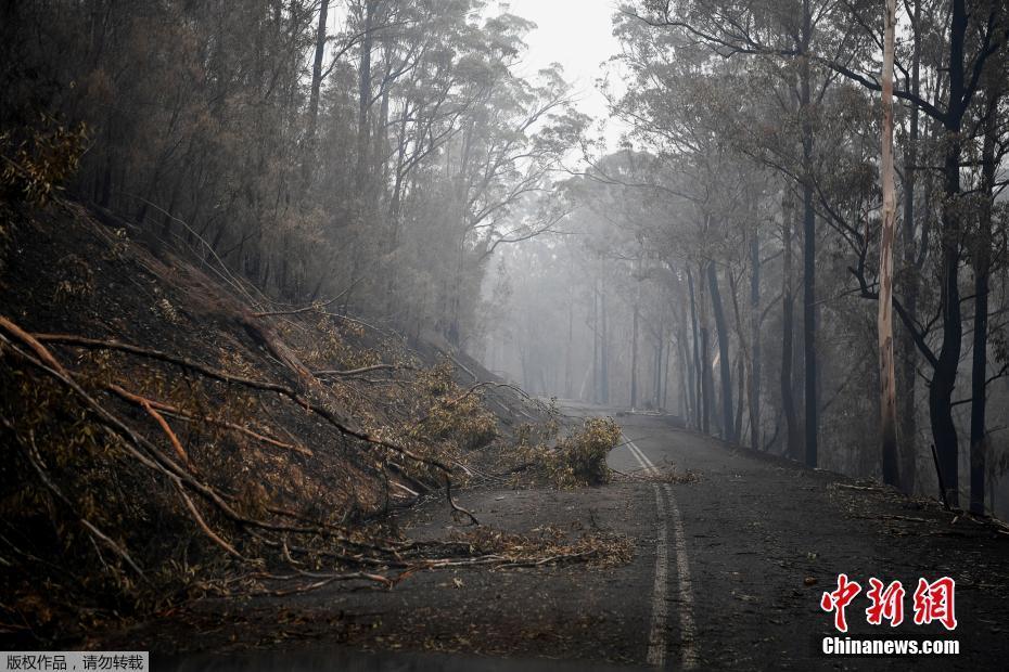 """自然的""""圍獵""""!澳洲山火致數千人逃難上億動物死亡-中新網"""