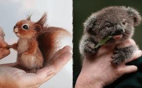 那些刚出生的可爱小动物们