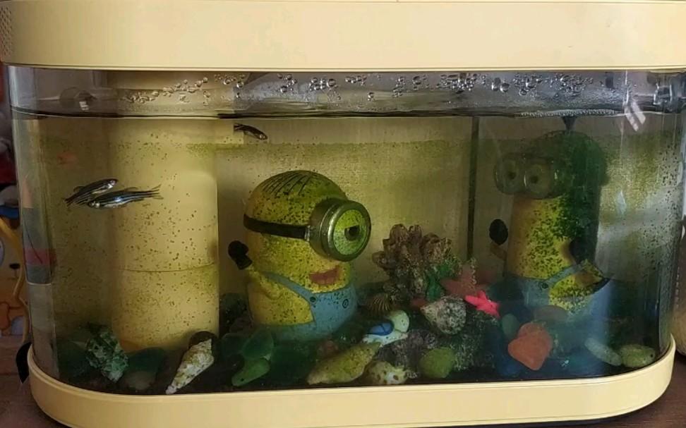 【疫情下的兒童居家生活】幼兒園大班,今天為大家《介紹我的小漁缸》_嗶哩嗶哩 (゜-゜)つロ 干杯~-bilibili