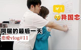 【恋爱vlog#11】 平凡的生活值得纪念的瞬间  两个人四只猫   自己做饭   打卡星空恋语乌龙茶
